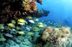 Le paradis des plongeurs, Key Largo, FL