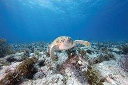 Rencontre avec les tortues de mer