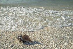 Coquillages sur la plage de sable blanc, Sanibel Island