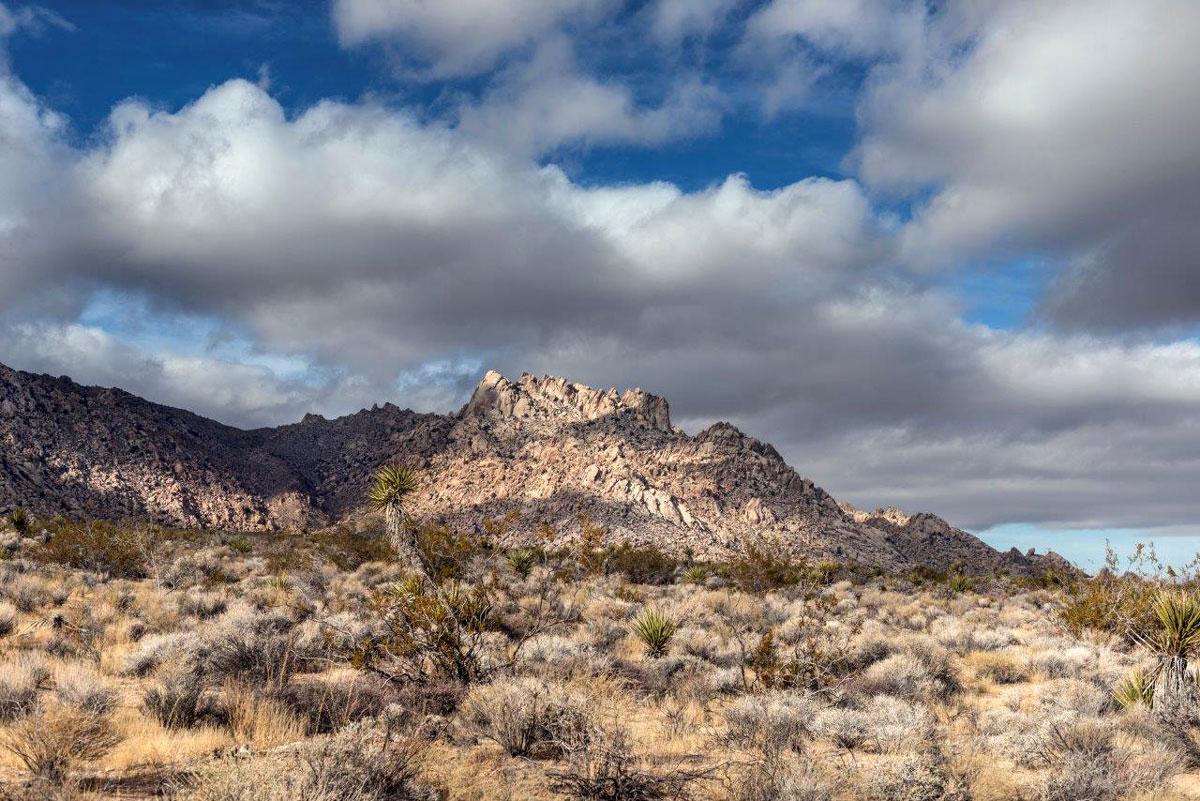 Désert de Mojave près de Bartow