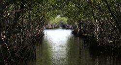 Bayou dans les Everglades