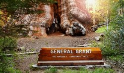General Grant Tree Trail