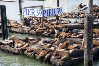 Célèbres phoques - Fisherman's Wharf sur le Pier 39