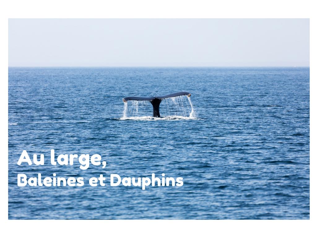 4 choses à faire à Cape Cod : Safari aux baleines